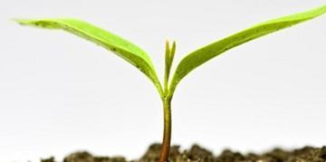 Семена и препарати за растителна защита в Кубрат