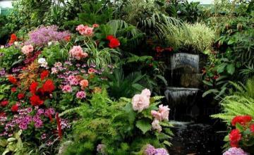 Семена за цветя в Козлодуй