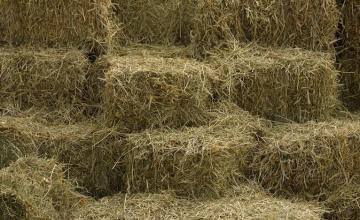Сено, бали, слама и тревни смески в Липен-Монтана - Мото Макс - Аврам Василев