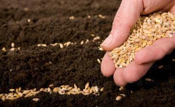 Сортови семена за селскостопански култури в Свищов