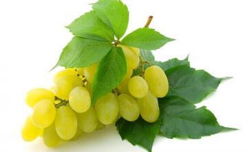 Винен сорт грозде Шардоне в Добротица-Ситово