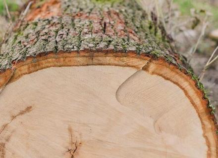 Дърва за огрев в Мадан и Смолян - Молайс ЕООД