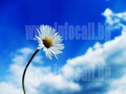 Хомеопатични лекарства в Русе - Аптека Калинови