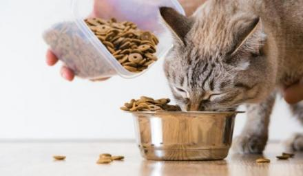 Храна за котки Габрово - Чавдар