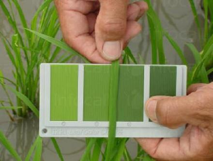 Качествени торове за листно подхранване в Карнобат - Агромагазин Желанкова