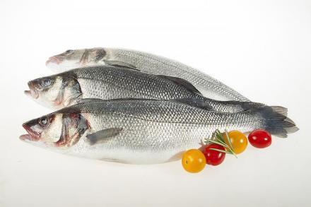 Охладена риба във Варна - Север Експорт ООД