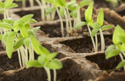 Препарати за растителна защита в Свищов - Финмарк Комерсиал