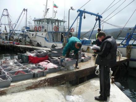 Прясна черноморска риба във Варна - Север Експорт ООД