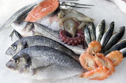 Продажба на риба и рибни продукти на едро във Варна - Север Експорт ООД