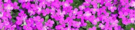 Пролетен и есенен разсад в Стара Загора - Разцвет Стоев