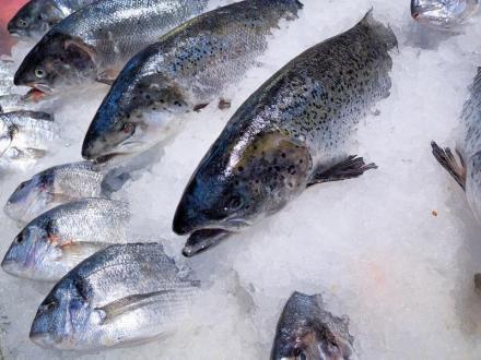 Риба и замразена стока Плевен - Млечен Лидер ЕООД
