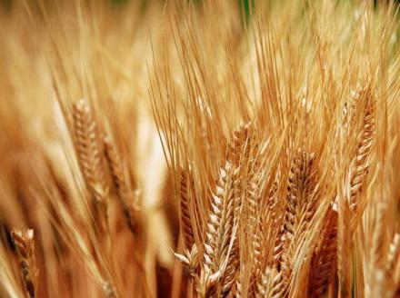 Селскостопанска продукция в Горско Абланово-Опака - Кооперация Черноломие