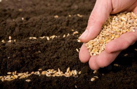 Сортови семена за селскостопански култури в Свищов - Финмарк Комерсиал