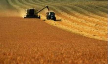 Зърнени култури в Свобода - Чирпан - Земеделско сдружение Свобода