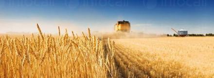 Зърнени култури в Търговище - ЕТ Васико - Кольо Василев