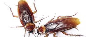 Борба с хлебарки