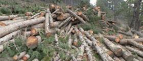 Дърводобив в Борино-Смолян