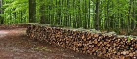 Дърводобив в град Сливен