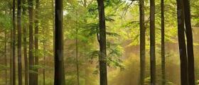 Дърводобив в Искър - Самоков