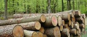 Дърводобив в Крайници-Дупница
