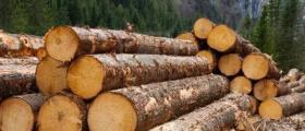 Дърводобив в Област Кюстендил