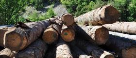 Дърводобив в област Търговище