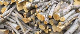 Дърводобив в Омуртаг-Търговище