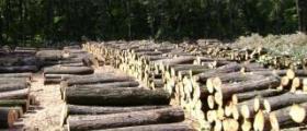 Дърводобив в Смядово-Шумен