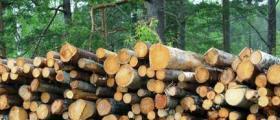 Дърводобив в София-Център