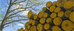 Дърводобив в Стара Загора