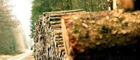 Дърводобив в Трън, Перник и София