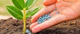 Дистрибуция и продажба на препарати за растителна защита в Кубрат