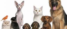 Дистрибуция на ветеринарномедицински препарати в Хасково