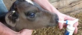 Дистрибуция на ветеринарномедицински препарати в Плевен