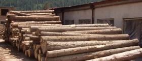 Добив и обработка на дърва в Сърница