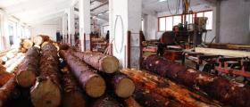 Добив объл дървен материал в Чепеларе