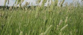 Фуражно производство в Троян - Институт по планинско животновъдство и земеделие