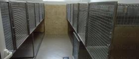 Хотел и стационар за кучета, котки и други животни Плевен