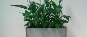 Интериорно озеленяване във Видин