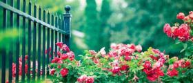 Изграждане на градини и настилки в двора в София