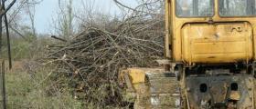 Изкореняване на лозя и овощни градини в Ловеч