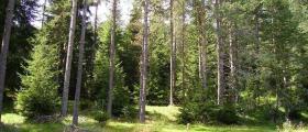 Изкупуване гори за сеч Варна