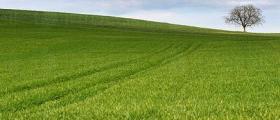 Изкупуване и обработка на земи в Червен бряг