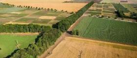 Изкупуване земеделска земя в Ставерци-Долна Митрополия