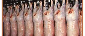 Износ месо