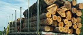 Износ на дърва за огрев Област Кюстендил