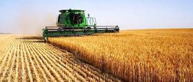 Жътва и събиране на зърно Тотлебен-Пордим