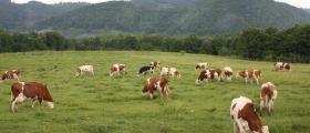 Животновъдство в Чавдар-София