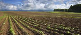 Комасация на земеделски земи в София