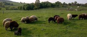 Консултантско-внедрителска дейност в животновъдство и земеделие в Троян